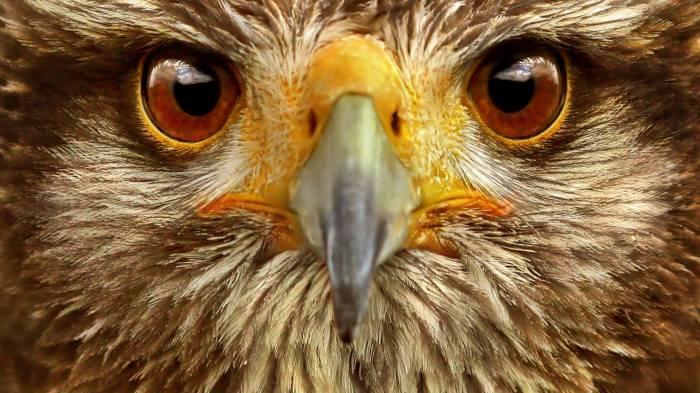 beautiful-animal-eyes-eyes-34592648-1920-1080